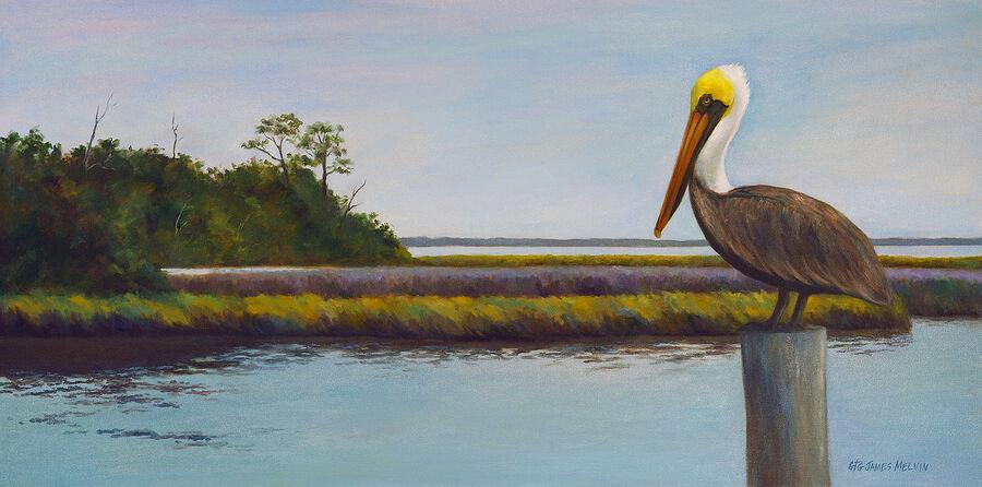 James Melvin, Obx  Pelican View